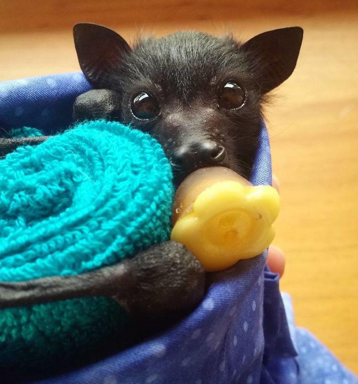 Depois dessas fotos, você nunca mais vai achar os morcegos assustadores 14