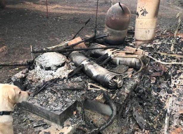 Cachorro vira herói ao se recusar a deixar cabras sozinhas em incêndio 5