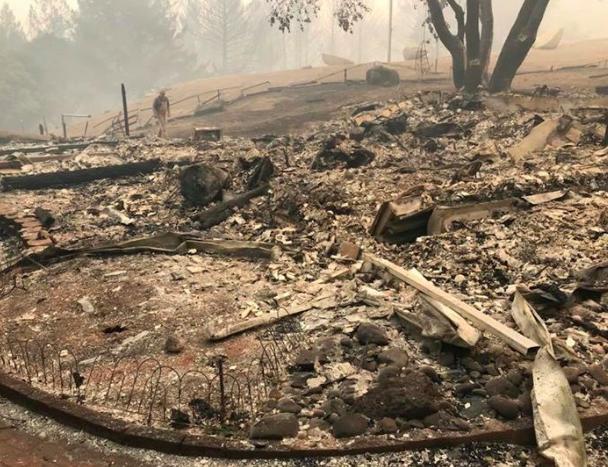 Cachorro vira herói ao se recusar a deixar cabras sozinhas em incêndio 7