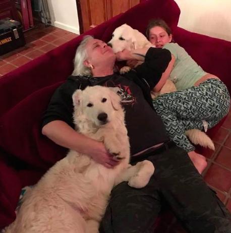 Cachorro vira herói ao se recusar a deixar cabras sozinhas em incêndio 3