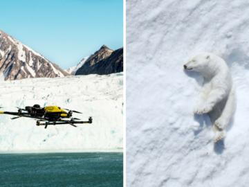 Uso de drones e inteligência artificial ajudam no avanço das pesquisas sobre a vida animal 1
