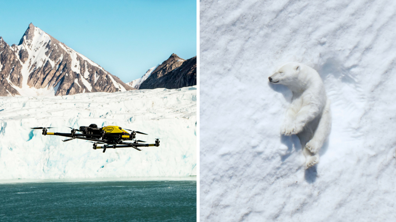 Uso de drones e inteligência artificial ajudam no avanço das pesquisas sobre a vida animal 6