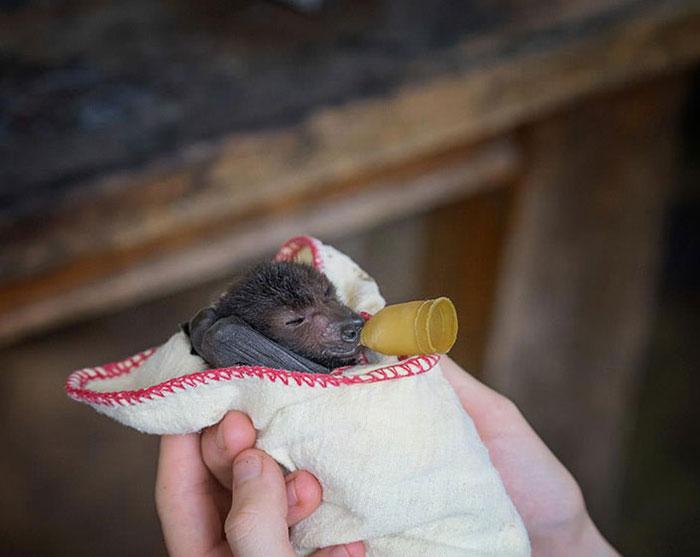 Depois dessas fotos, você nunca mais vai achar os morcegos assustadores 11