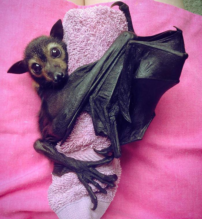 Depois dessas fotos, você nunca mais vai achar os morcegos assustadores 12