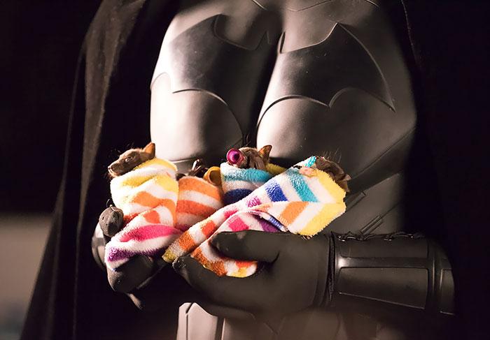 Depois dessas fotos, você nunca mais vai achar os morcegos assustadores 6