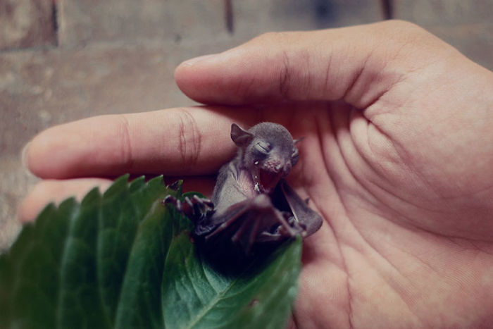 Depois dessas fotos, você nunca mais vai achar os morcegos assustadores 13