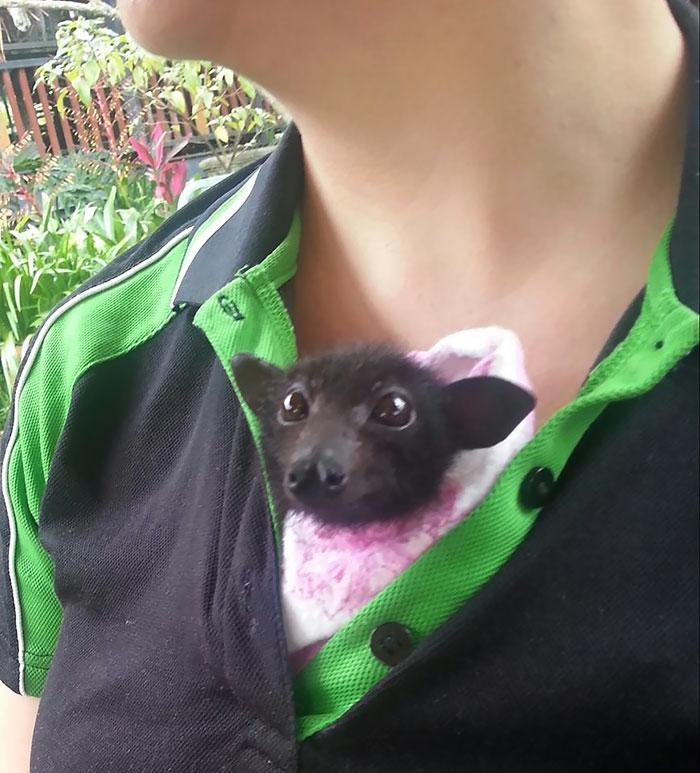 Depois dessas fotos, você nunca mais vai achar os morcegos assustadores 17