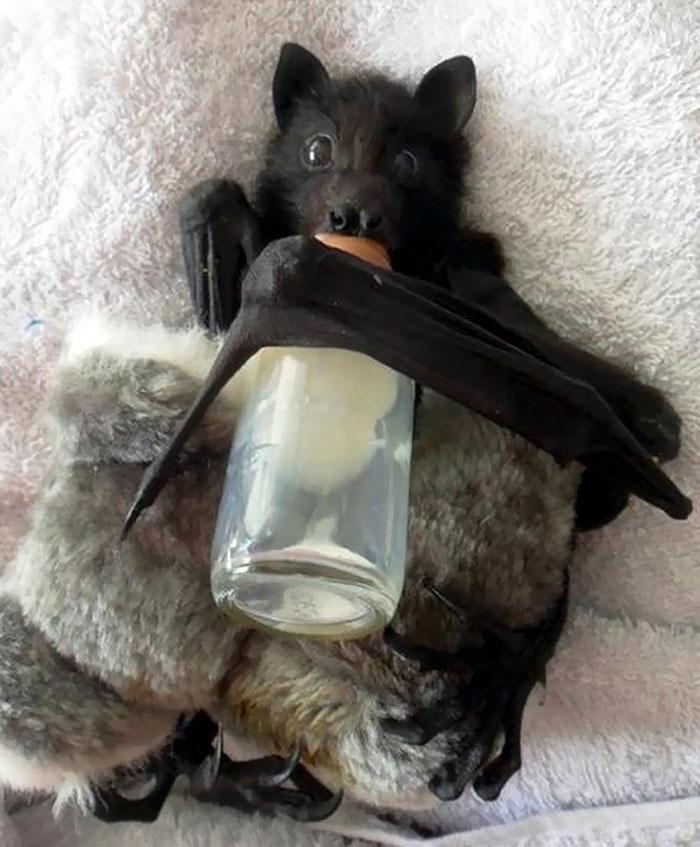 Depois dessas fotos, você nunca mais vai achar os morcegos assustadores 9