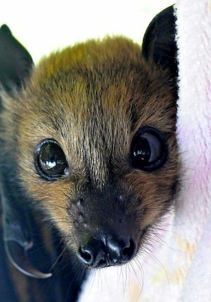 Depois dessas fotos, você nunca mais vai achar os morcegos assustadores 10