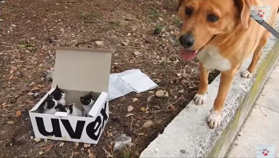 Cão socorrista adota quatro gatinhos abandonados em montanha na Grécia 1