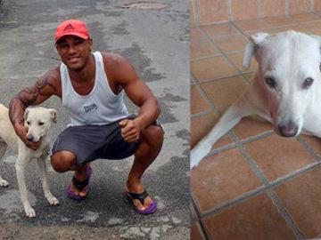 Cãozinho 'mijão' do WhatsApp é adotado pela sua 'vítima' 1