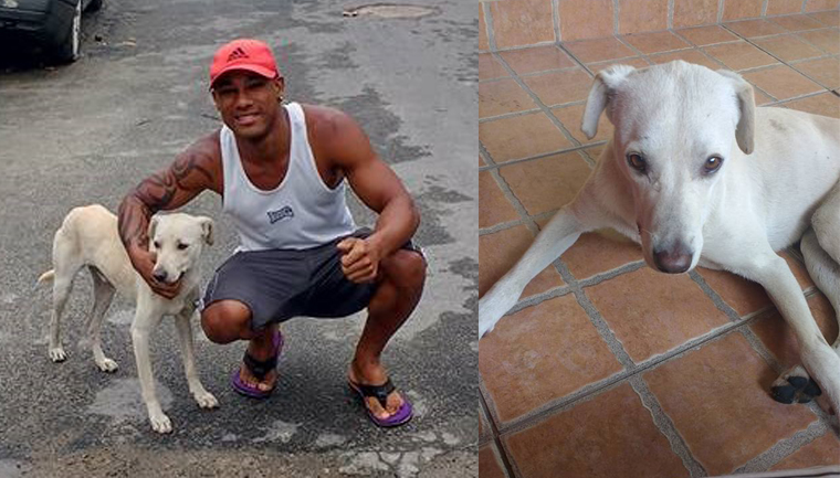 Cãozinho 'mijão' do WhatsApp é adotado pela sua 'vítima' 18