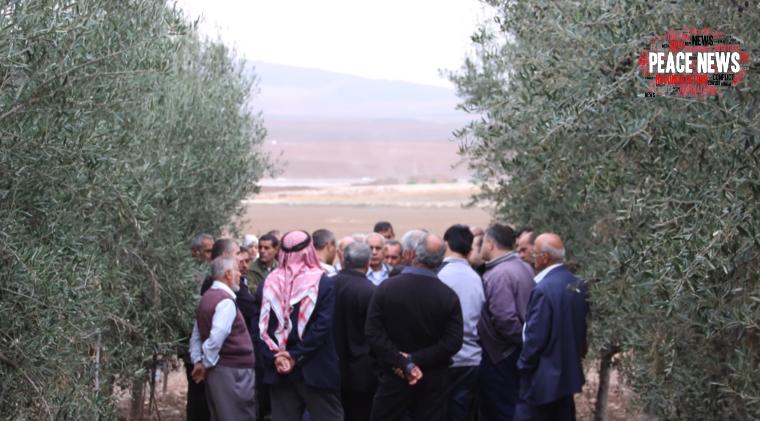 Israelenses e palestinos encontram na produção de azeite de oliva um caminho para a paz 5