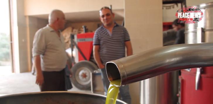 Israelenses e palestinos encontram na produção de azeite de oliva um caminho para a paz 4