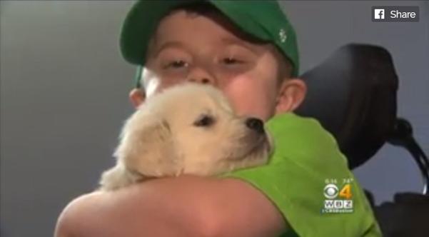 Menino apaixonado pela cor verde ganha cachorro nascido com coloração verde para ser seu cão de serviço 2