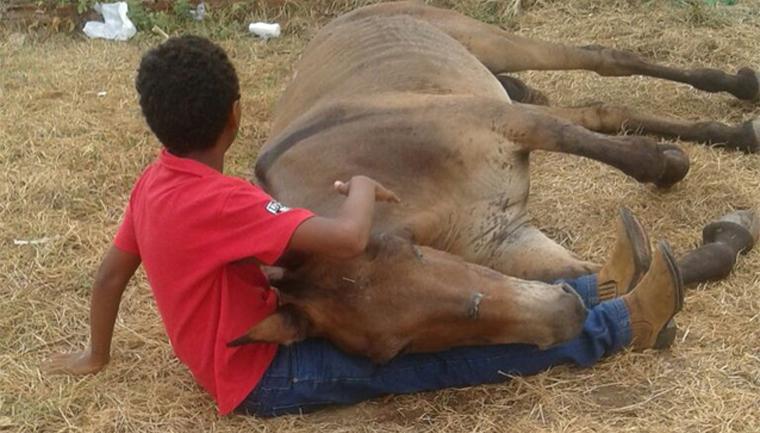 Menino chora e dá carinho a burro que foi abandonado após ter sido atropelado 21