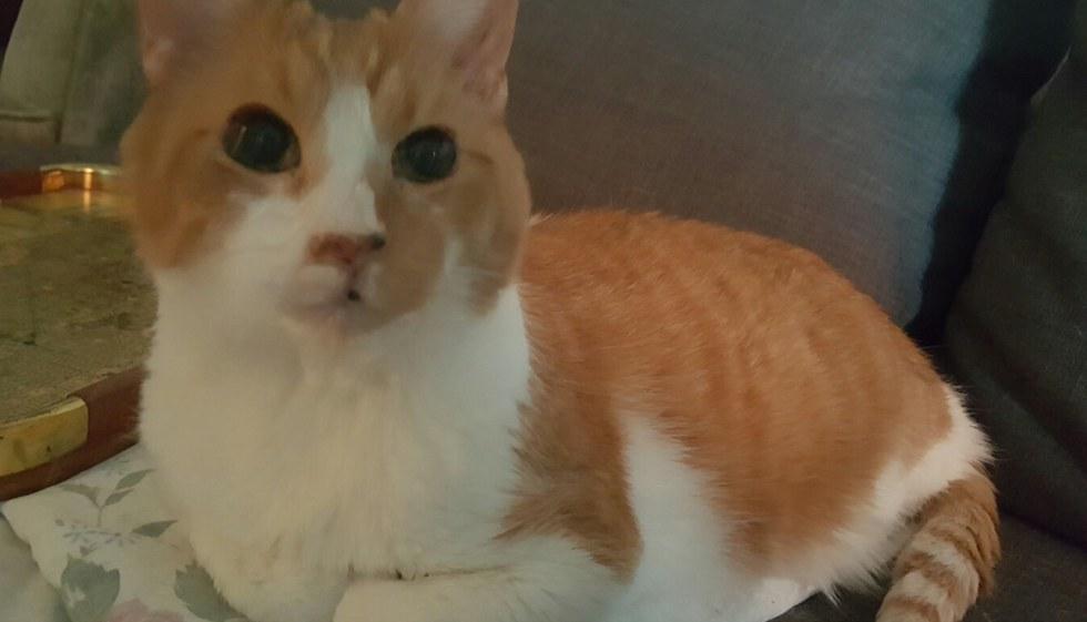 Gato que morava há 10 anos em um abrigo, fica eufórico ao ser adotado 2