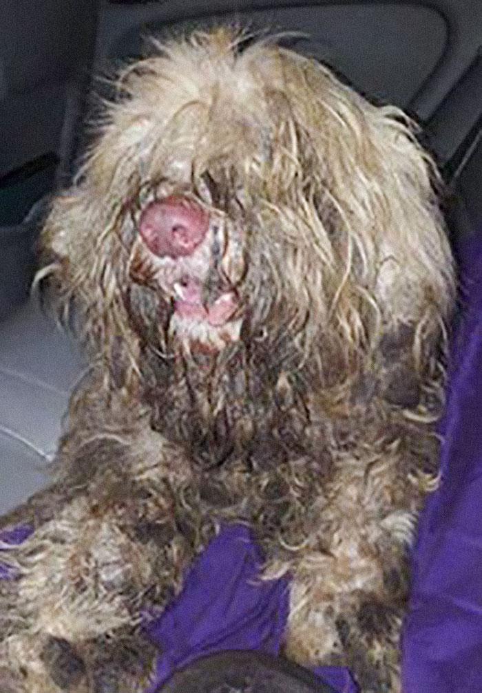 Cão encontrado em beira da estrada é salvo graças a uma tosadora de cachorros 1