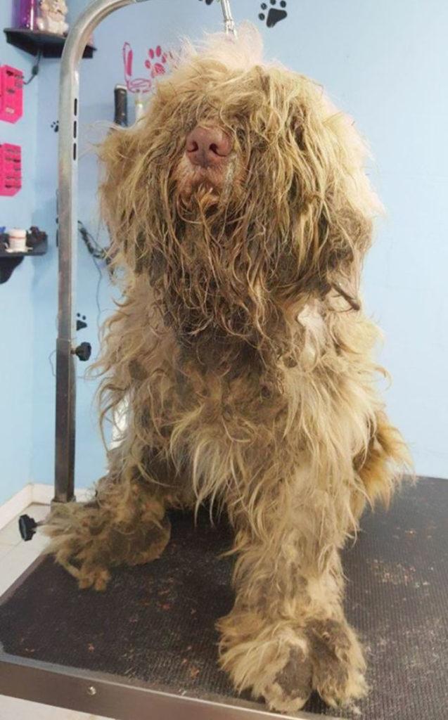 Cão encontrado em beira da estrada é salvo graças a uma tosadora de cachorros 2