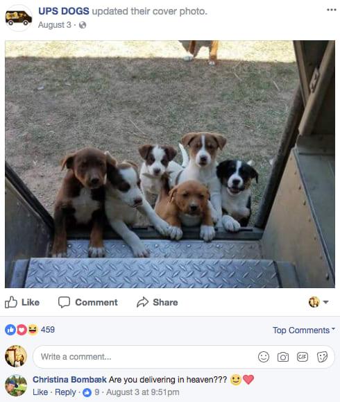 Carteiros dos EUA criam grupo no Facebook onde compartilham fotos dos seus amigos de quatro patas 2