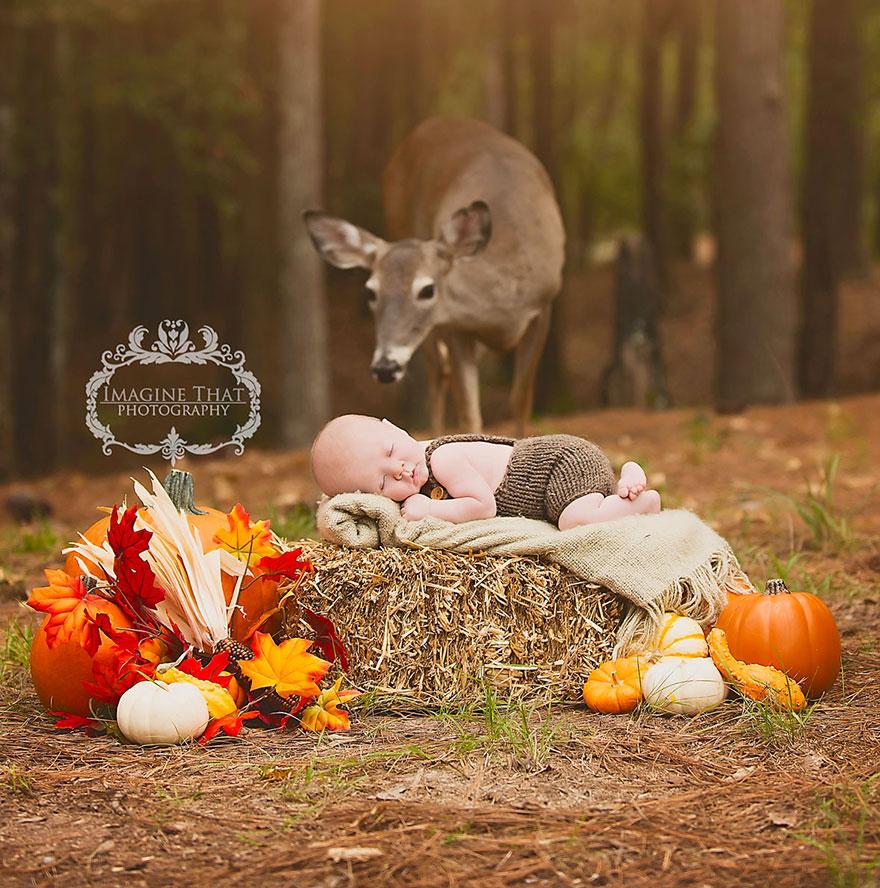 Essa linda cerva apareceu no meio de uma sessão de fotos de bebê e o resultado é apaixonante 3
