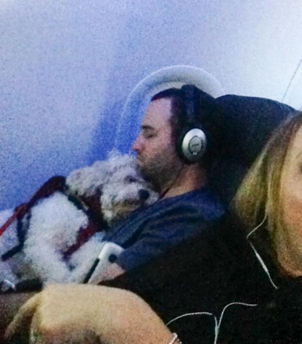Explosão de fofura com esses animais viajando de avião! 1