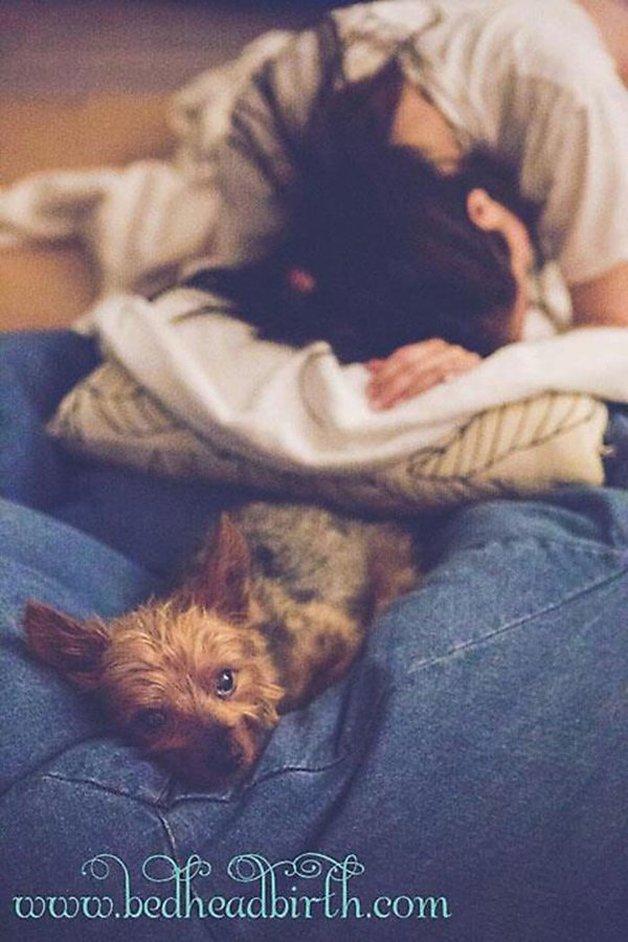 10 fotos apaixonantes de cães acompanhando o parto de suas donas 2