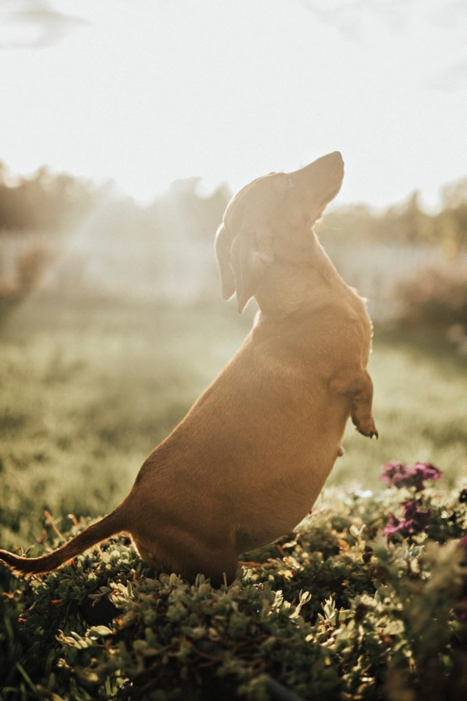 Fotógrafa faz ensaio de sua cachorrinha grávida e nós estamos encantados 3