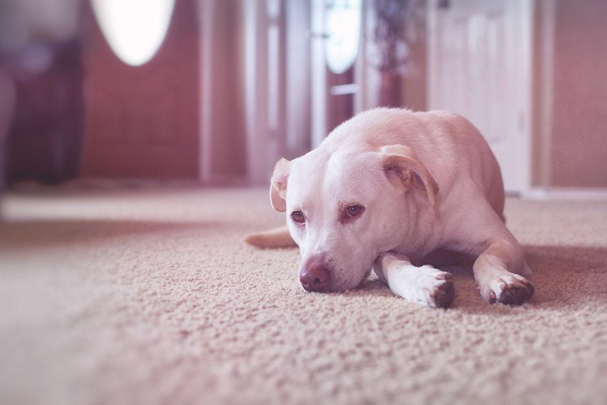 O lindo relato da adoção de uma cachorra que virou a melhor amiga dessa garotinha 10