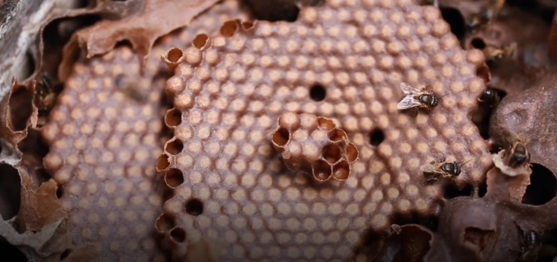 A importância da pesquisa de abelhas no trabalho de produção de mel do Seu Luiz no Pará 3