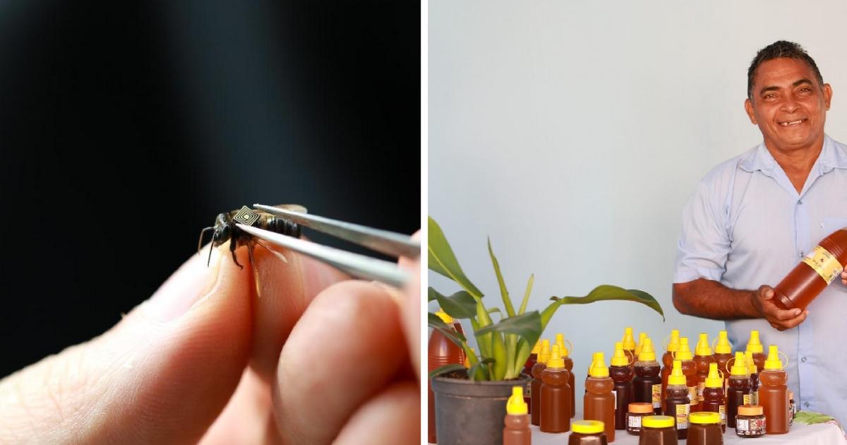 A importância da pesquisa de abelhas no trabalho de produção de mel do Seu Luiz no Pará 1