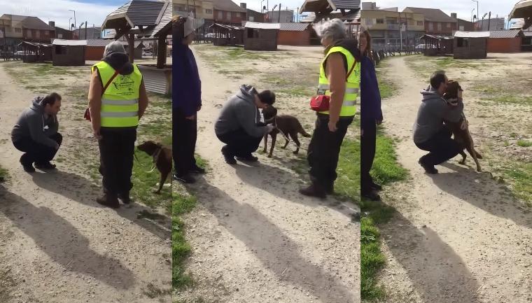 Após três anos perdida, cadelinha reencontra seu tutor e explode de felicidade 1