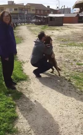 Após três anos perdida, cadelinha reencontra seu tutor e explode de felicidade 3