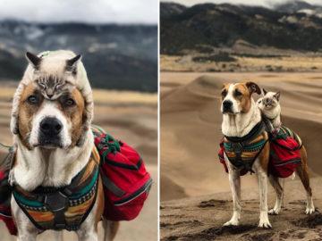 Cão e gato aventureiros exploram juntos paisagens de tirar o fôlego 1