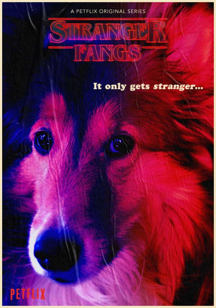 Brasileira recria pôsteres de séries da Netflix com cães para apoiar abrigo de animais nos EUA 3