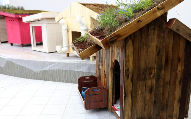Alunos de engenharia constroem incríveis casas sustentáveis para cachorros 3
