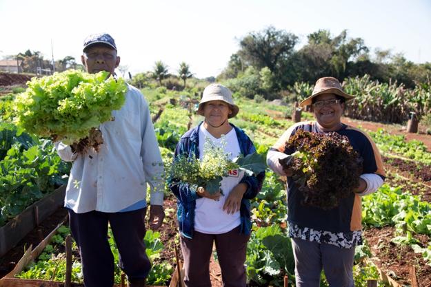 Hortas comunitárias em Maringá transformam a vida dos moradores da cidade 2