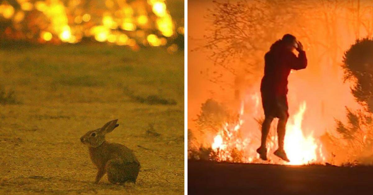 Homem se arrisca em incêndio na Califórnia para salvar coelho selvagem 3