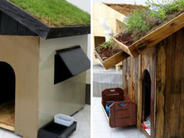 Alunos de engenharia constroem incríveis casas sustentáveis para cachorros 12