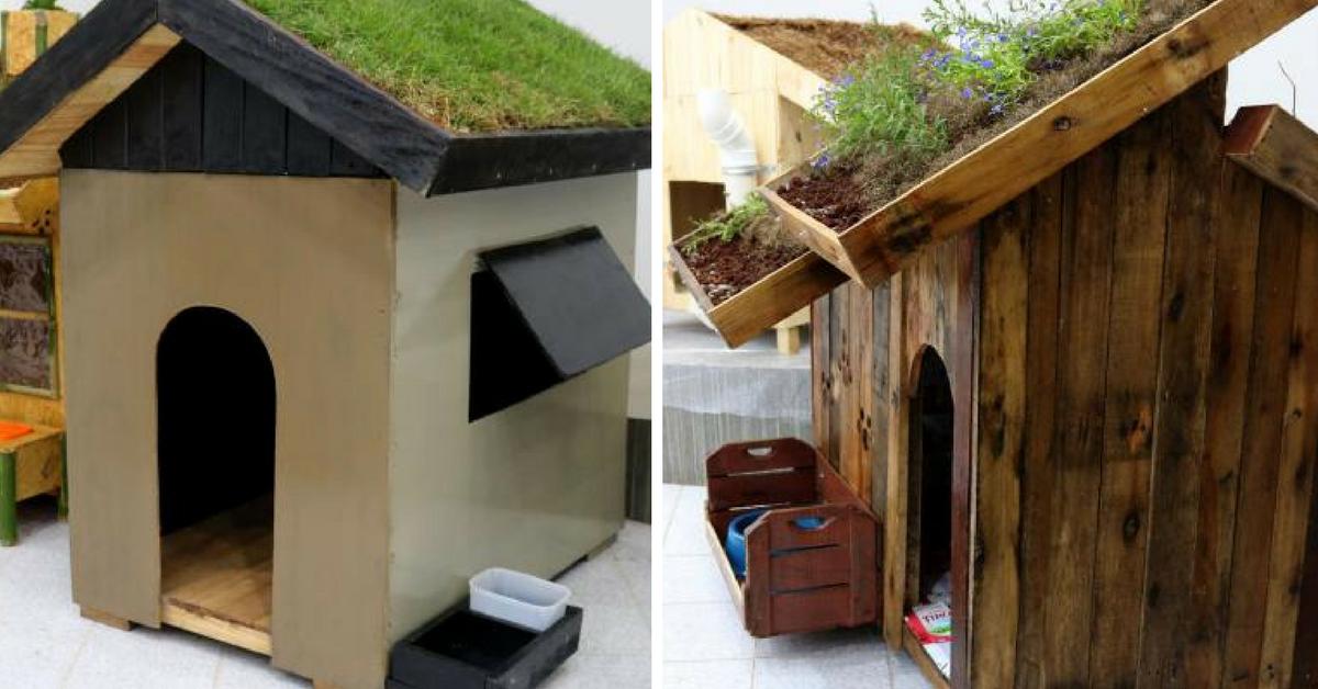 Alunos de engenharia constroem incríveis casas sustentáveis para cachorros 1