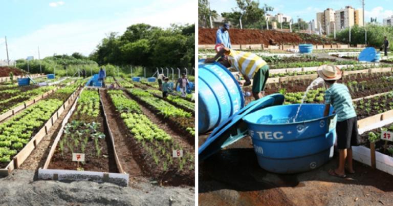 Hortas comunitárias em Maringá transformam a vida dos moradores da cidade 1