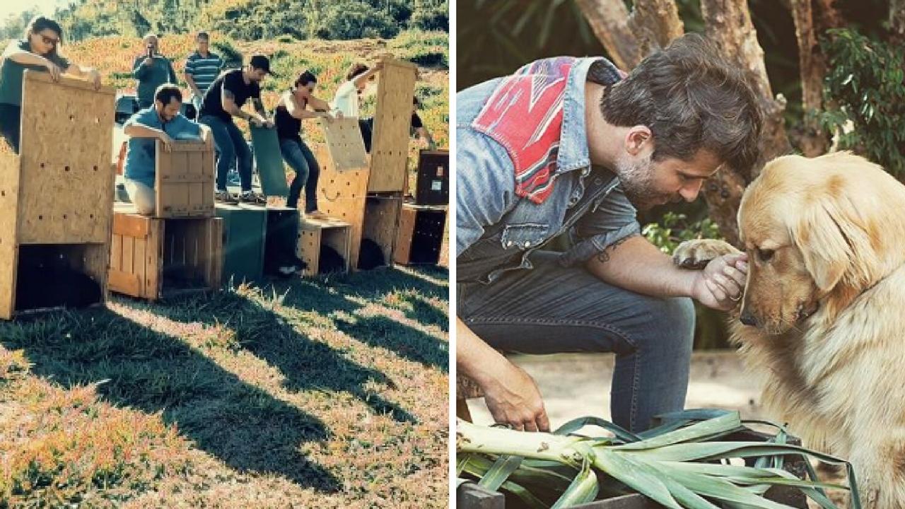 Bruno Gagliasso cede seu próprio sítio para soltura de animais silvestres no Rio 1