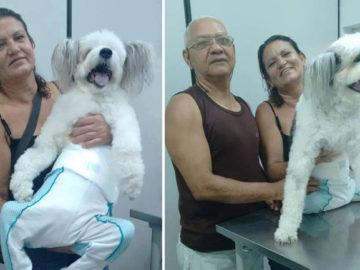 Tutora de cão tetraplégico faz de tudo para o bichinho ter uma vida feliz 2