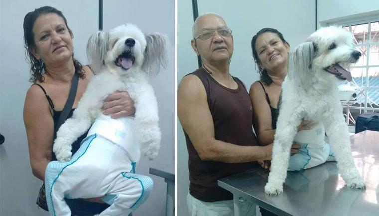 Tutora de cão tetraplégico faz de tudo para o bichinho ter uma vida feliz 1