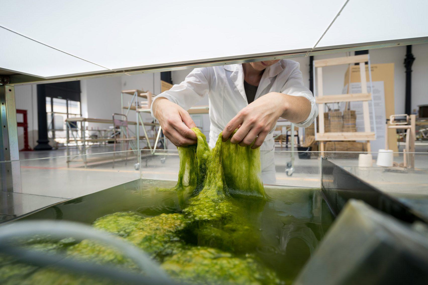 Designers holandeses transformam algas em bioplástico para impressão em 3D 2