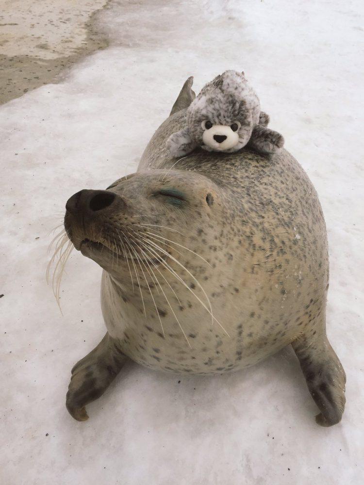 O xodó dessa foca com uma versão sua de pelúcia é puro amor 2