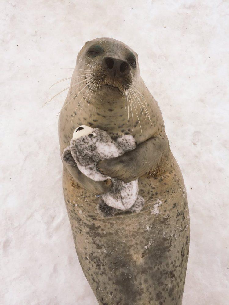 O xodó dessa foca com uma versão sua de pelúcia é puro amor 3