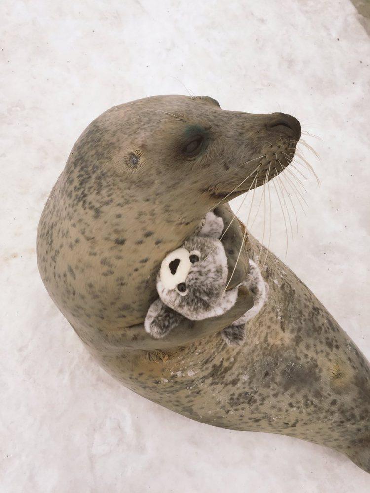 O xodó dessa foca com uma versão sua de pelúcia é puro amor 4