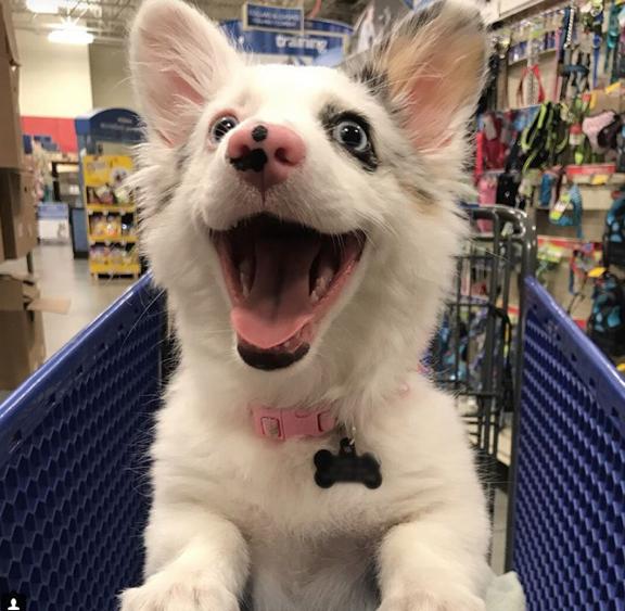 O dia mais feliz deste filhote foi quando fez compras pela primeira vez 2
