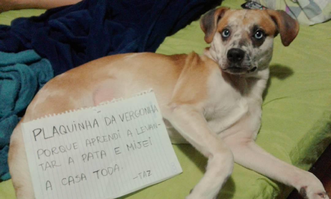 """18 cachorros que aprontaram e receberam a """"plaquinha da vergonha"""" 14"""